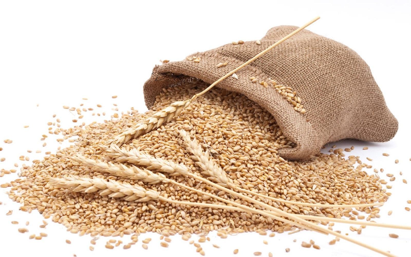 Цена на зерно – октябрь 2020г.