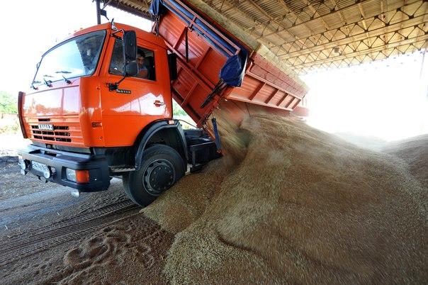Зерновой союз: Россия может потерять до 8% рекордного урожая