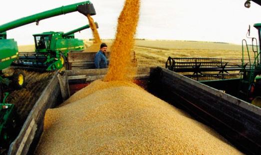 Новосибирское и Омское зерно пойдет на экспорт: ОЗК приступило к закупу пшеницы