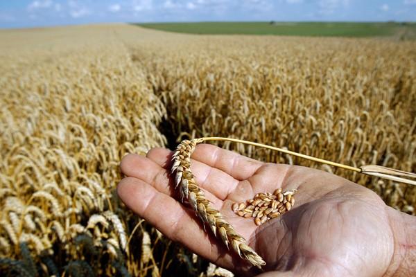 В 2018 году вводятся новые ГОСТЫ на зерно