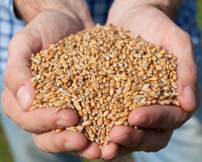 Цены на зерно растут во всех регионах России