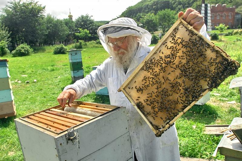 Пчелы проснулись: время собирать пыльцу