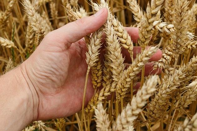 Говорят фермеры: какие проблемы требуют незамедлительного решения