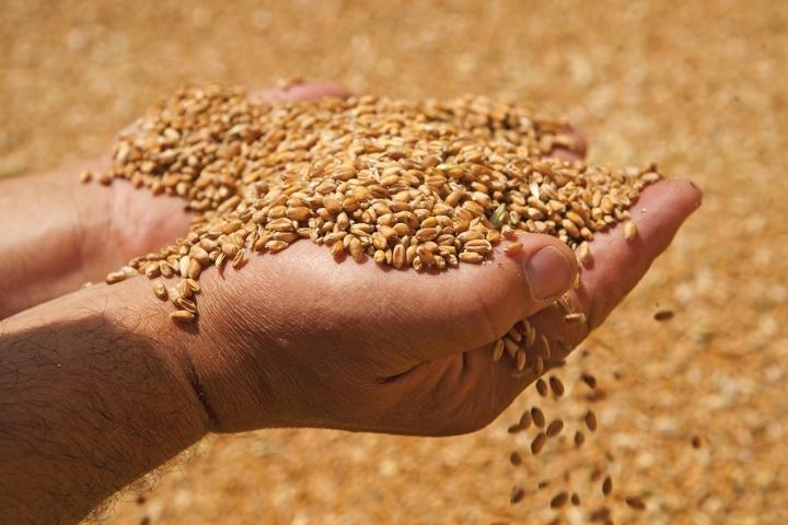 Урожай - 2018. Грозит ли России дефицит зерна?
