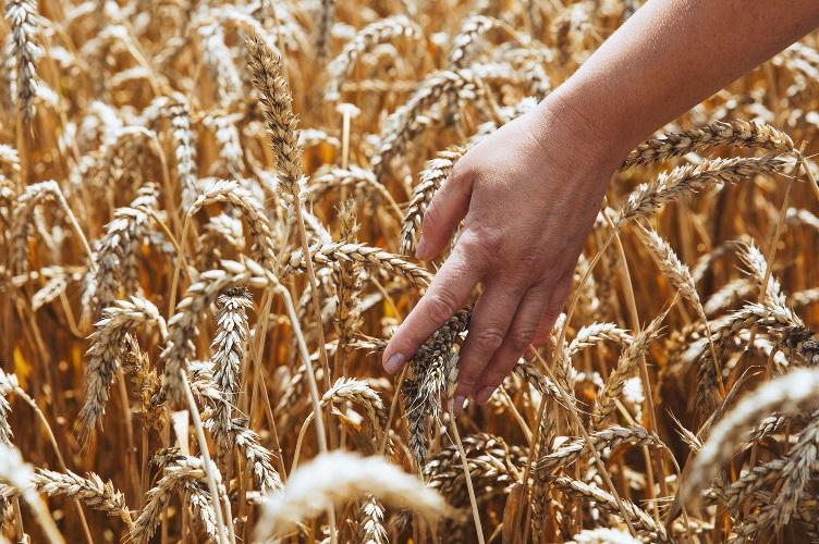 Ущерб от ЧС станет рекордным за пять лет, а агрострахованием охвачены лишь 2-3% аграриев