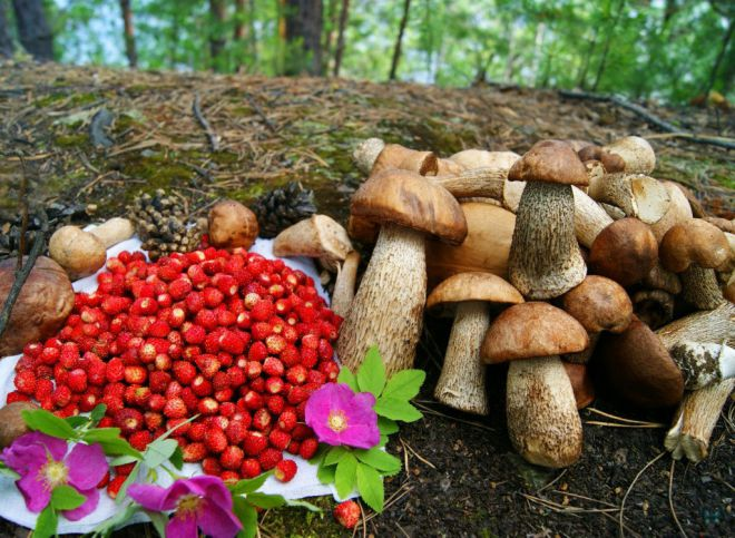 Бизнес на грибах и ягодах выведут из тени?