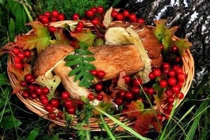 Как заработать на лесных грибах, ягодах и орехах?