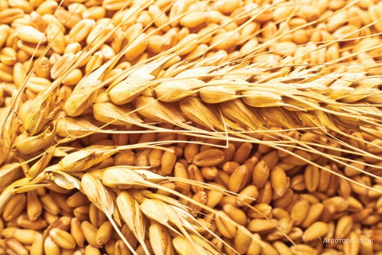 Цены на зерно - обзор  рынка за 11.10.2019г.