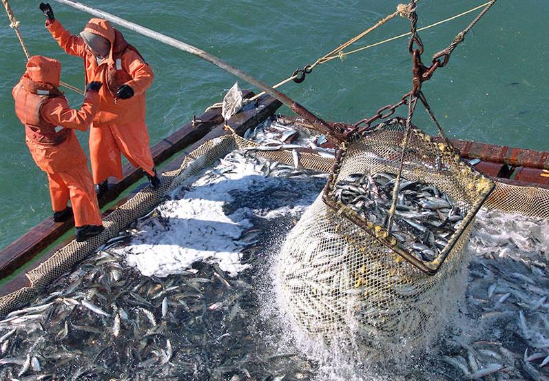 Сколько рыбы ловят в России