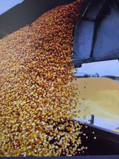 Зерно на экспорт – кто в плюсе ?
