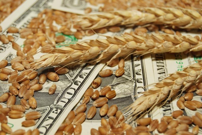 Купить зерно – что изменилось ?