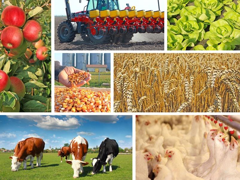 Цены на сельскохозяйственную продукцию