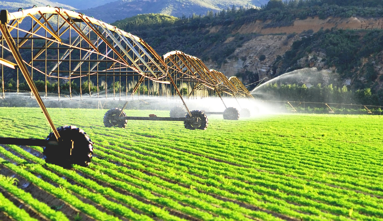 Сельское хозяйство - со щитом или на щите ?