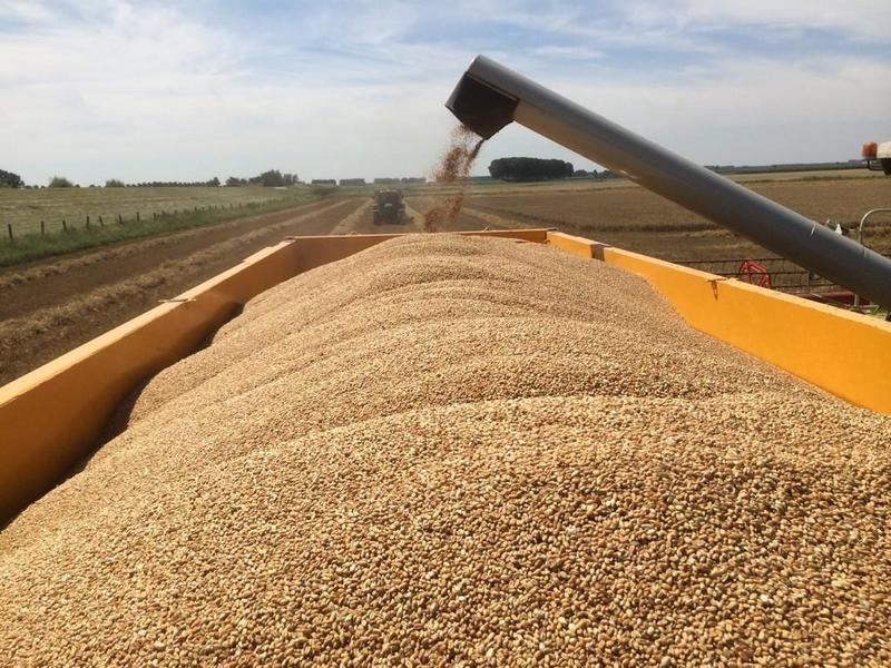 Зерновой рынок России  – итоги 2019