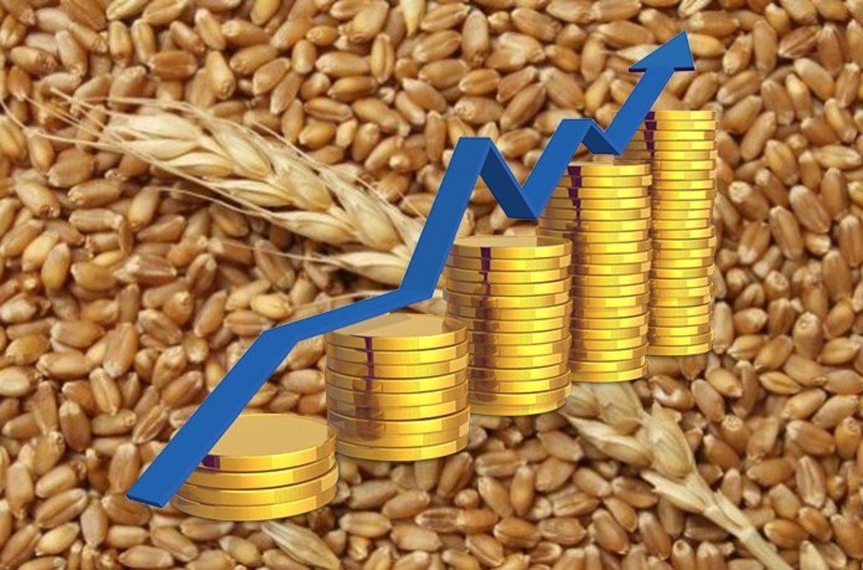 Цена на пшеницу на фоне  экспортных ограничений.