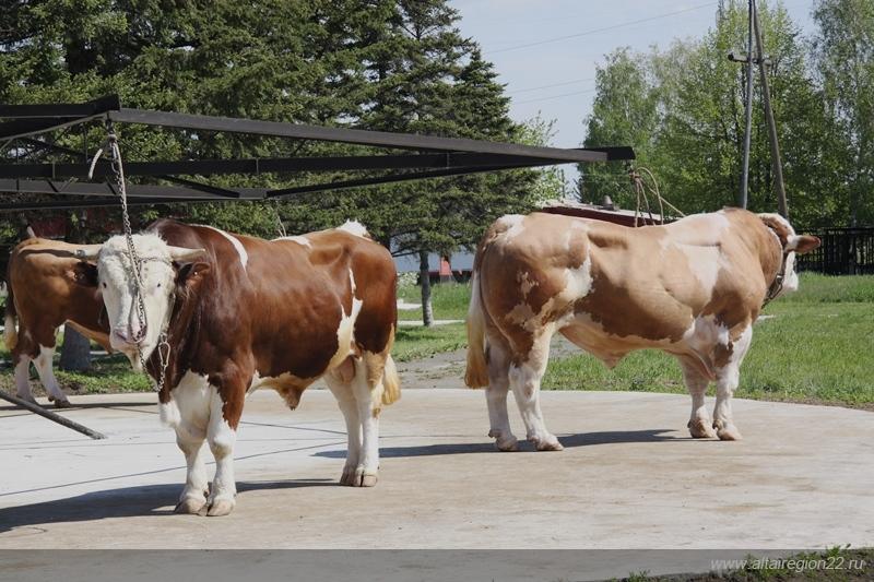 Мини-фермы животноводство частные объявления шины бу на ниву частные объявления