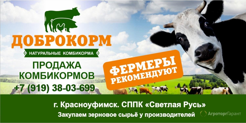 Объявление Продаем комбикорм для КРС в Пермском крае