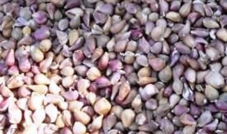 Объявление Семена чеснока воздушной бульбочки Любаша в Белгородской области