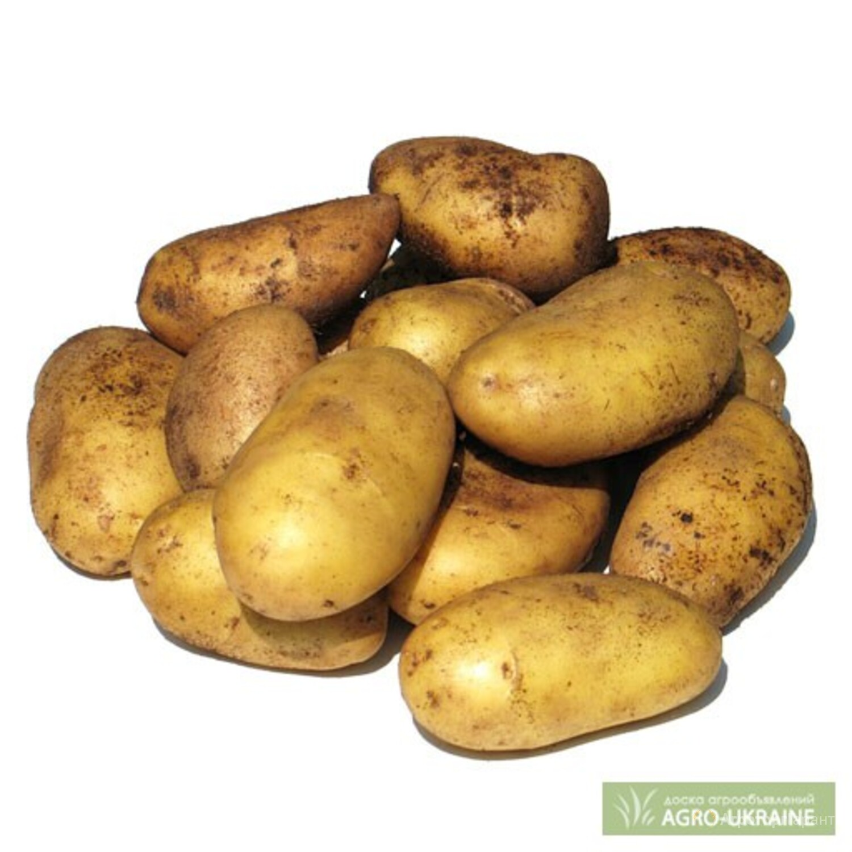 Объявление Продаю картофель в Ростовской области