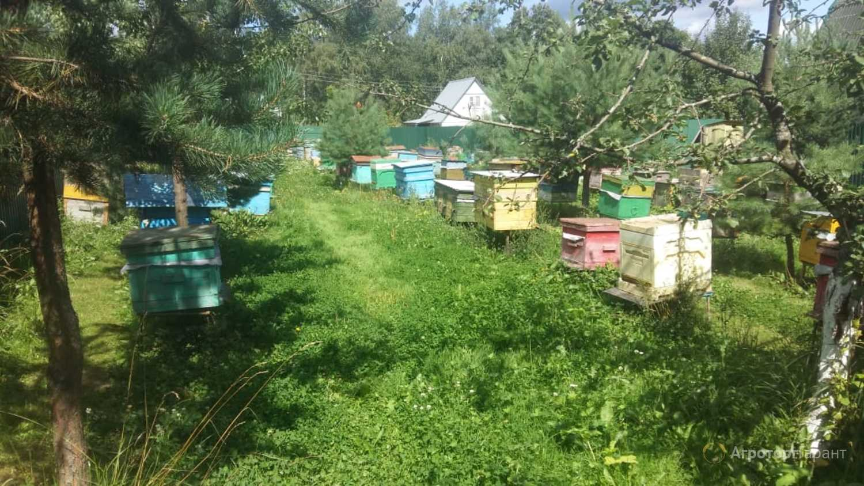 Объявление Пчелы Пчелопакеты Пчелосемьи в Москве и Московской области