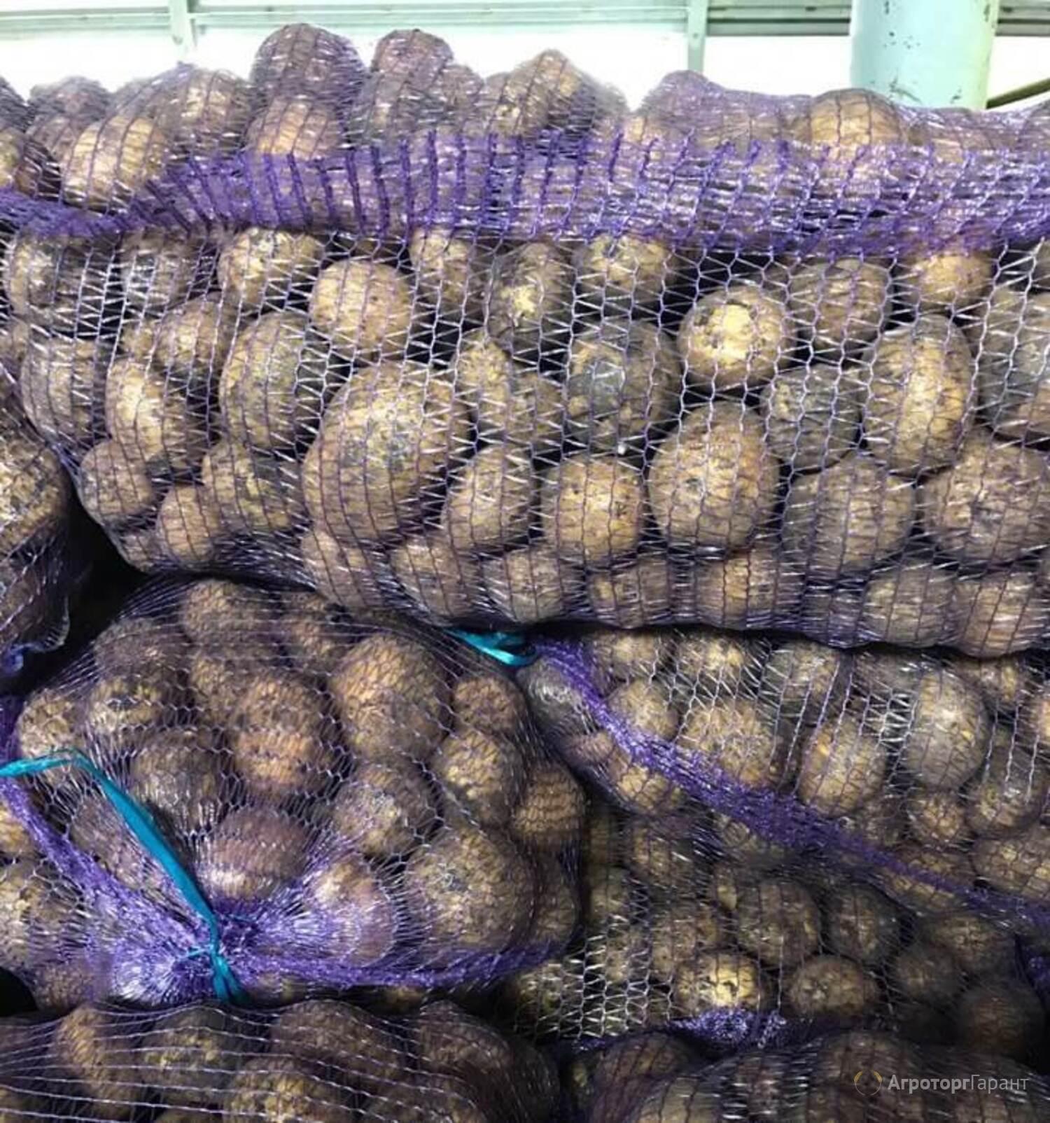 Объявление Картофель 5+ от производителя в Тульской области