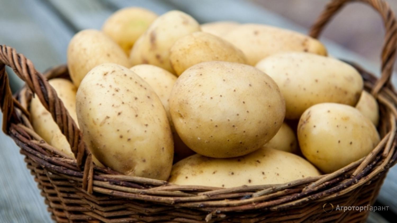 Объявление Продажа картофеля оптом от производителя в Республике Татарстан