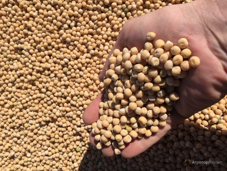 Объявление Горох продовольственный, можно на семена в Алтайском крае