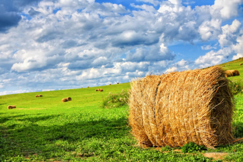 Объявление Продам сено. Урожай 2021 года. в Алтайском крае