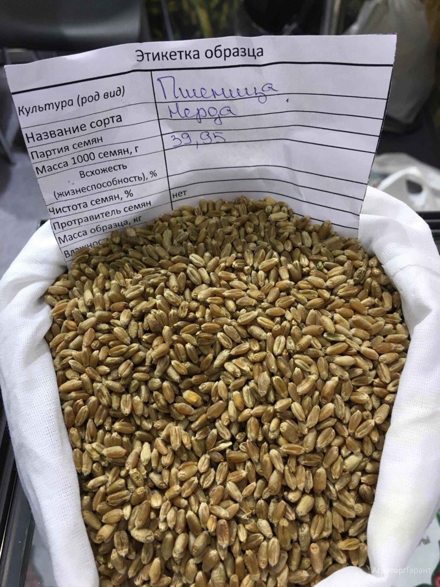 Объявление Мягкая яровая пшеница линия Lut-805 в Тюменской области