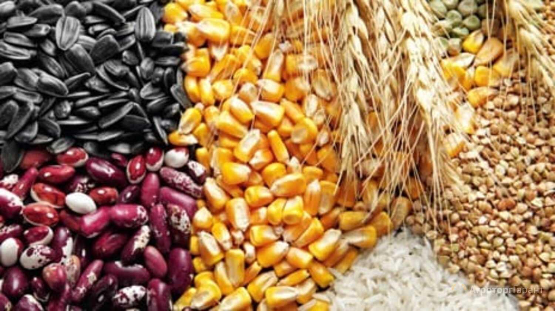 Объявление Пшеница ,ячмень, кукуруза,нут,чечевица,фасоль в Самарской области