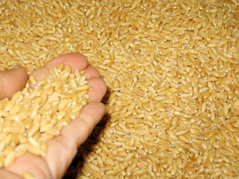Объявление Пшеница фуражная в Москве и Московской области