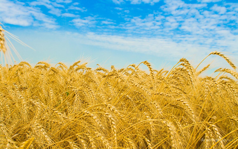 Объявление Наша компания на постоянной основе производит закуп  для собственных нужд, зерновых и зернобобовых культур, а именно:   - Рожь  - Рапс  - Горох   - Пшеница   - Ячмень  - Овес Если у Вас, есть предложение по сотрудничеству можете направить его на E-mail: bogdanov@sptprime.ru  либо по контактному телефону 8-923-746-49-10 (WhatsApp, Telegram, Viber) в Новосибирской области