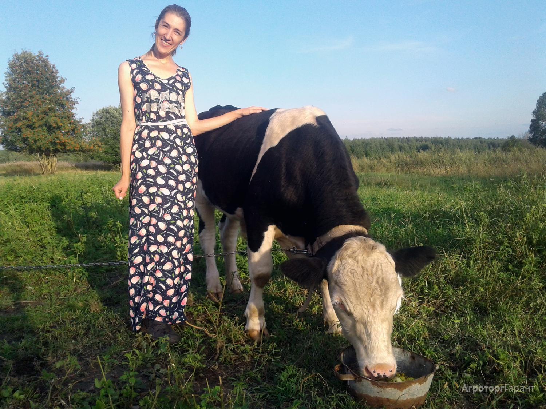 Объявление Продаем молодого быка производителя в Тверской области
