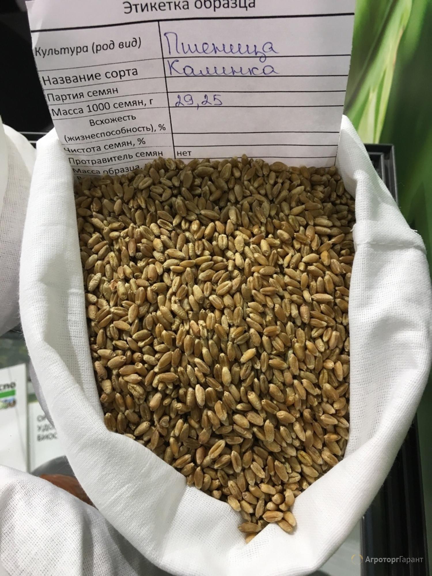 Объявление Мягкая яровая пшеница линия F04-14 в Тюменской области