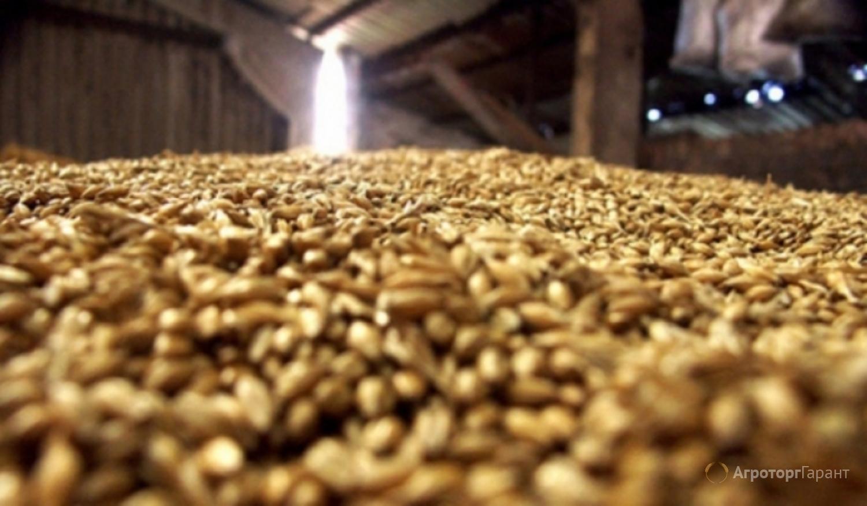 Объявление Фуражная пшеница в Алтайском крае