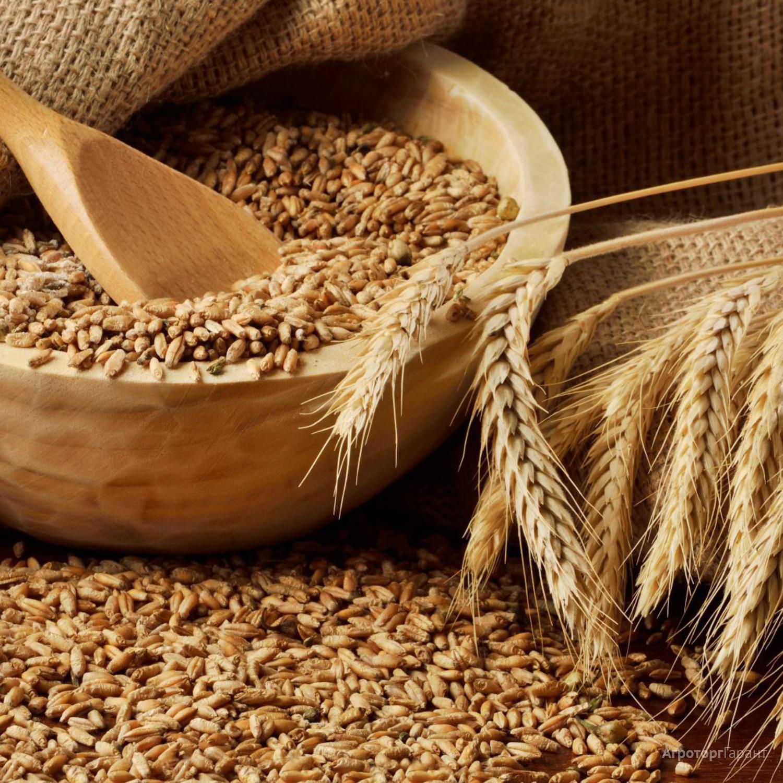 Объявление Продаем пшеницу 4 класса в Алтайском крае