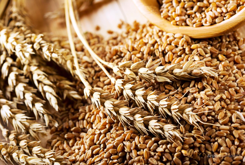 Объявление Закупаем фуражную пшеницу 4, 5 класса в Республике Крым