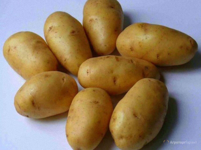 Объявление Продам  картофель в Республике Крым