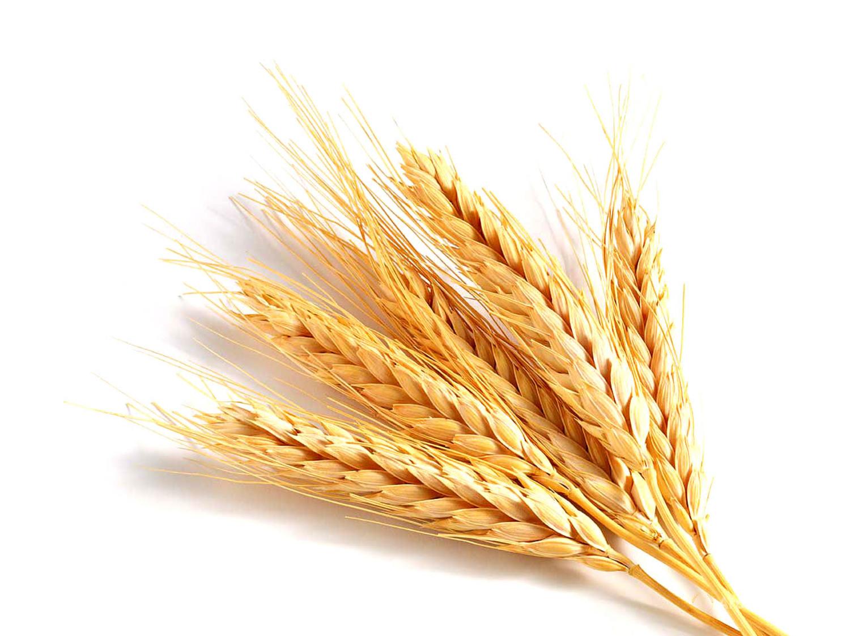 Купим пшеницу на элеваторе Нория НЛ 5А 12