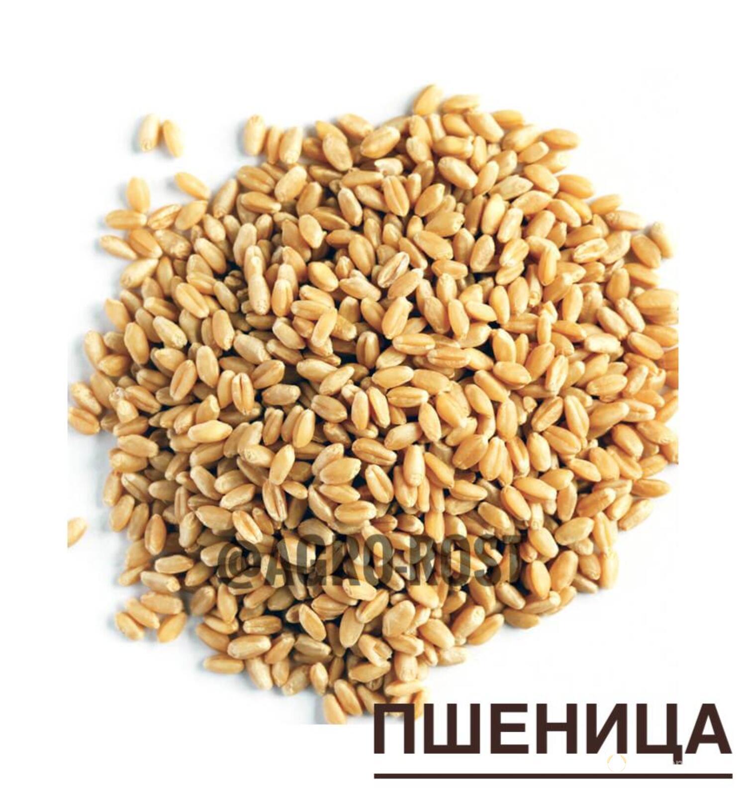 Объявление Пшеница 3,5 класс в Республике Татарстан