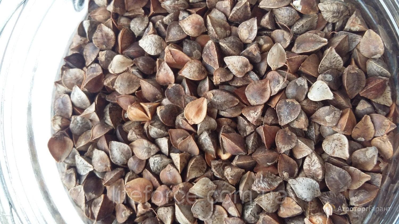 купить семена гречихи в алтайском крае цена