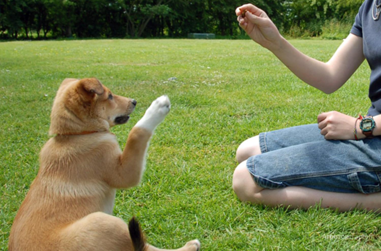 Купить домик для собаки бобровый дворик эстрада