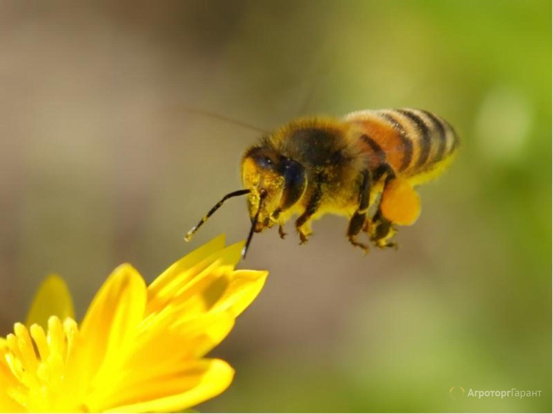 Объявление Продам мед в Воронежской области