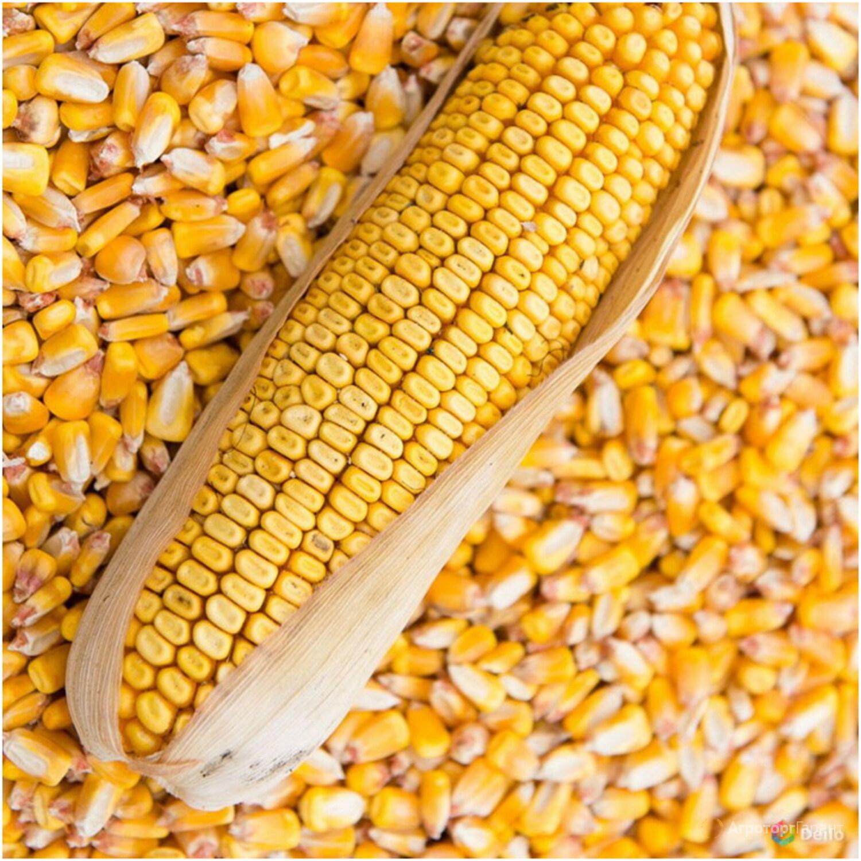 Объявление Кукуруза в Ульяновской области