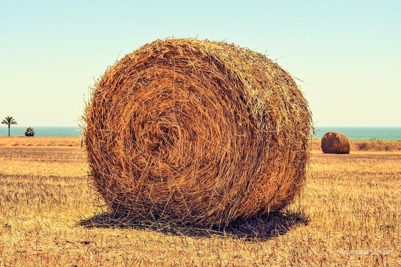 Объявление Хорошее сено в рулонах луговое пойменное, Чебоксары в Чувашской Республике