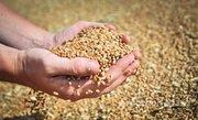Объявление Услуги по сушке и подработке сельхозпродукции в Алтайском крае