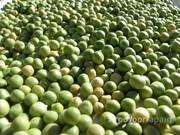 Объявление Семена гороха в Ростовской области