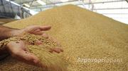 Объявление Услуги по аренде складов и подработке зерновых в Алтайском крае