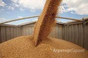 Объявление Пшеница 3 класса в Республике Крым