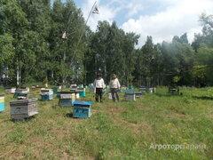 Объявление Мед натуральный в Алтайском крае